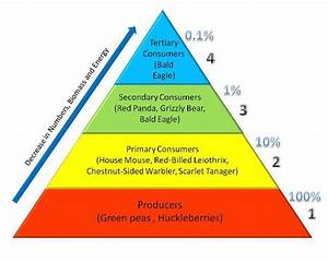 energy pyramid trophic levels Quotes