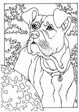 Boxer Coloring Pages Dog Sheets Kleurplaat Colouring Adult German Pointer Shorthaired Edupics Puppy Printable Boxers Animal Kleurplaten Horse Patterns Fall sketch template