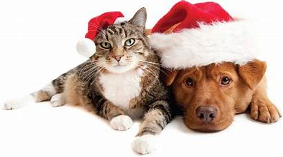 Holiday Pets Pet Cat Dog Dogs Holidays