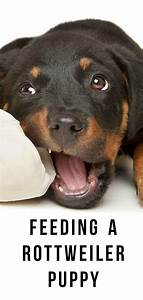 Raw Dog Feeding Chart Rottweiler Puppy Food Guide Goldenacresdogs Com