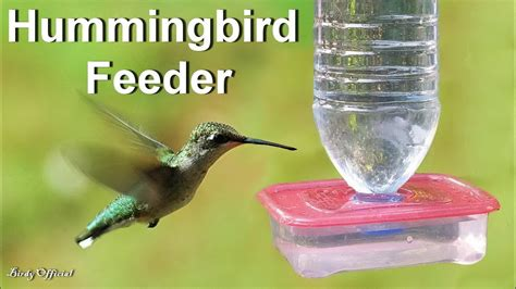 hummingbird feeder     diy hummingbird feeder