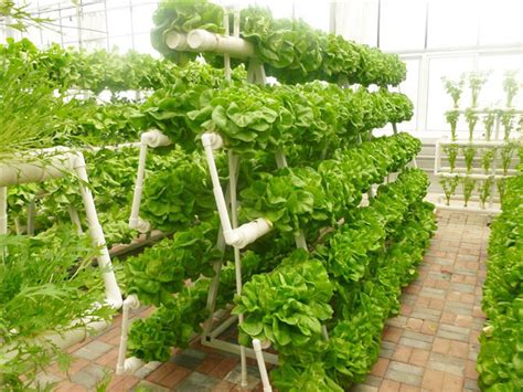 hydroponic food grade pvc gully for lettuce planting view