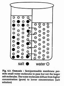 Osmosis And Diffusion  With Diagram