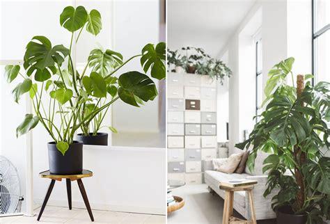 plante de bureau décoration bureau plantes
