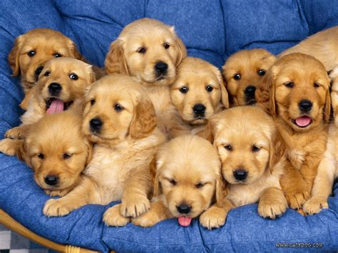 Some Cute Puppies And Dogs )  Amazing Wallpapers