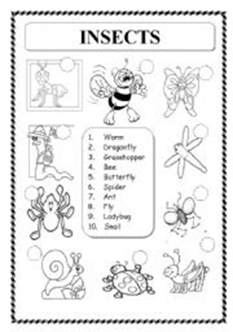 animals insects esl worksheet  knds