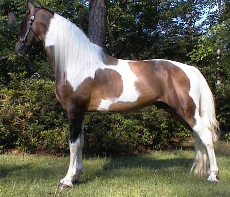 Allcity Sadle Ah 02 White 126 best color and markings images on
