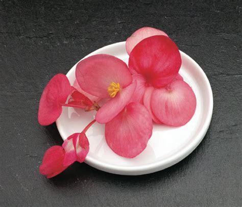 les fleurs comestibles en cuisine catalogue marius auda fleurs comestibles