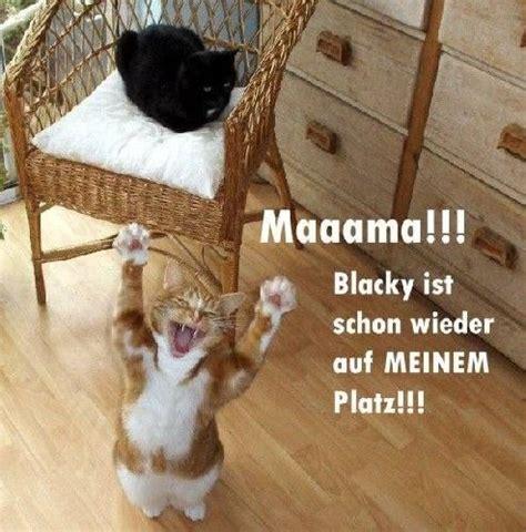 die 25 besten ideen zu lustige katzen auf lustige k 228 tzchen lustige katzen und