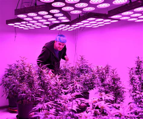 led plant lights led grow lights marijuana sales increase