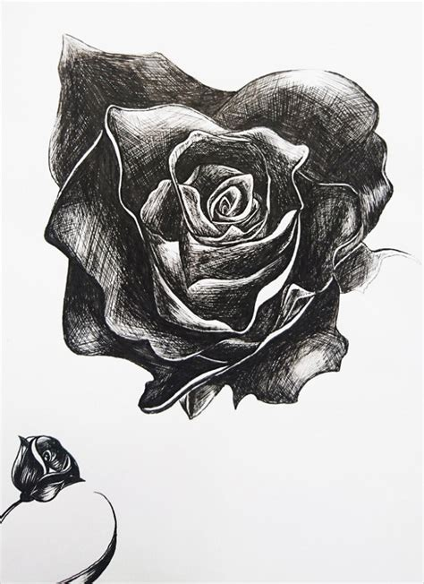 rose drawing  premium templates