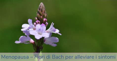 fiori di bach in menopausa fiori di bach in menopausa alleviare i sintomi con le
