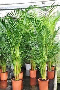 Pflanzen Für Gute Raumluft : wunderwaffen f r bessere raumluft blumen plants ~ A.2002-acura-tl-radio.info Haus und Dekorationen