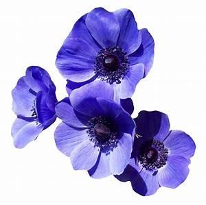 Purple Flower PNG Transparent Image - PngPix