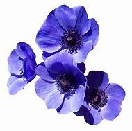 Transparent Purple Flowers