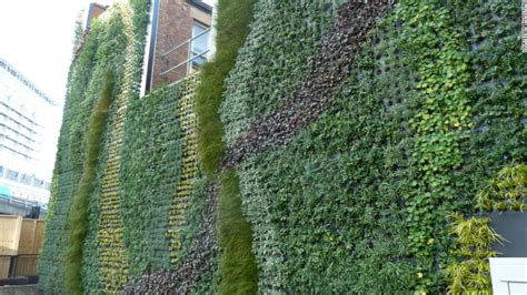 green walls create  urban jungles cnn