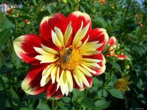 big flowers flowers for flower lovers beautiful big flowers wallpapers