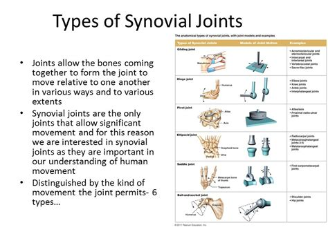 Joint Mechanics & Joint Injuries