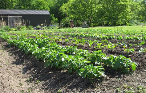 vegetable garden plants plan to plant longwood gardens