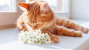 Welche Pflanzen Sind Für Hunde Giftig : giftige pflanzen diese pflanzen sind giftig f r haustiere ~ Watch28wear.com Haus und Dekorationen