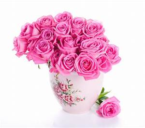 Beautiful Roses Images Collection For Free Download