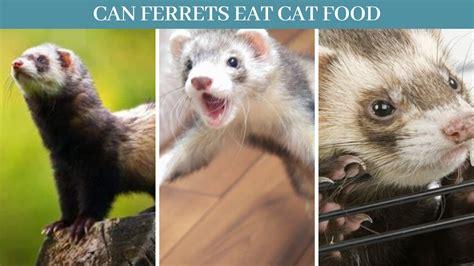 can ferrets eat dog food
