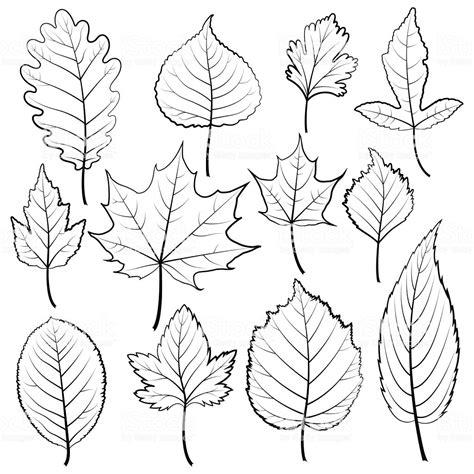 set  twelve black  white leaves   white background