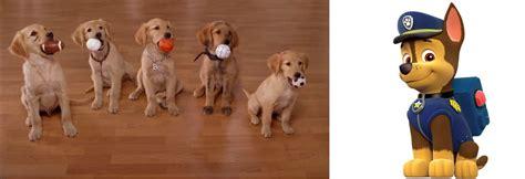 buddies meets paw patrol  bloodhoundpreston  deviantart