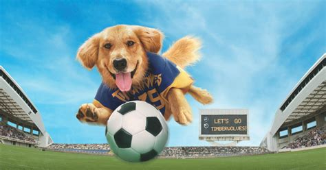 dog movies    netflix