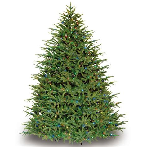 christmas tree at the 9 ft x 82 in belvedere fir barcana 6898