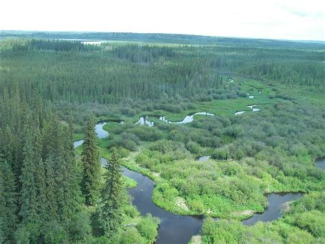 Boreal Forest What Is The Definition Of Boreal Forest
