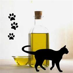 can cats olive benefits of olive for cats animalwised