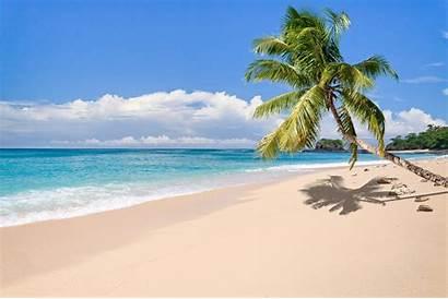 Tropical Island Beach Palm Trees Landscape Madagascar