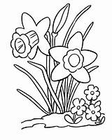 Daffodils Coloring Pages Daffodil Clip Digi Stamp Stamps Colouring Flower Quotes Sheets Tulips Starrynightsstudio Templates Digital Quotesgram Starry Nights Studio sketch template