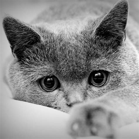 Kaķi #1 - Spoki