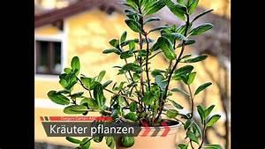 Kräuter Pflanzen Topf : diy kr uter pflanzen in trog topf oder balkonkiste f r ~ Lizthompson.info Haus und Dekorationen