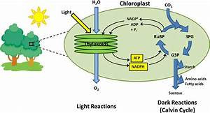 Photosynthesis Is An Energy Conversion Process Which