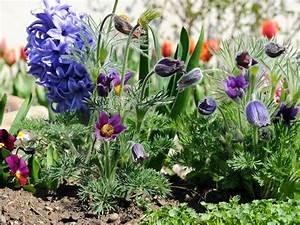 Welche Pflanzen Passen Gut Zu Hortensien : blumen blumenlexikon und blumenkatalog ~ Lizthompson.info Haus und Dekorationen