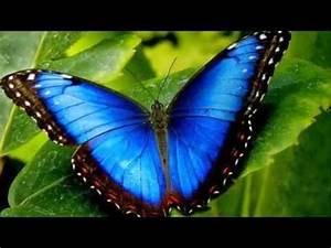 Most Beautiful Butterflies In The World Flying | www ...