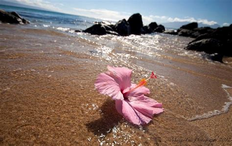 105 Best Images About Hawaii Flowers Hawaii On Pinterest