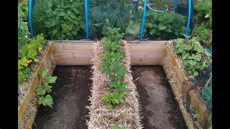 Where To Buy Straw Bales For Gardening by Raised Bed Vs Straw Bale Gardening