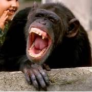 Funny laughing animals  Laughing