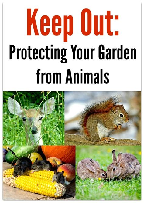 Keep Animals Out Of Garden by Keep Out Protecting Your Garden From Animals Live A