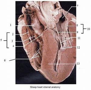Heart Model Contiunued