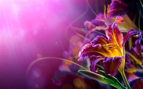 Flowers, Lilies, Bokeh, Purple Background Wallpapers Hd