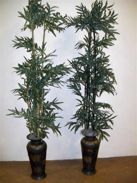 rp robelina palm indoor plants