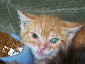 cat illnesses cat diseases