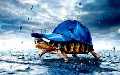 Turtle Rain Baseball Cap Tortoise Funny Desktop