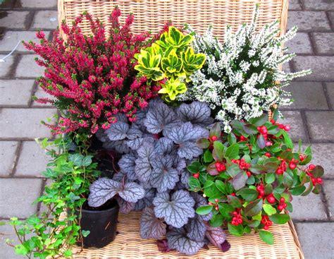 Winterharte Kübelpflanzen Schattig by Balkonpflanzen Sonnig Winterhart Vielseitige
