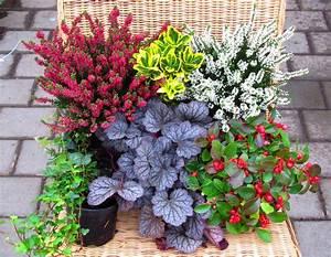 Winterharte Pflanzen Liste : balkonpflanzen set pflanzen versand harro 39 s pflanzenwelt ~ Michelbontemps.com Haus und Dekorationen